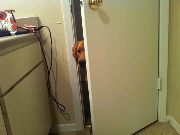 Ζώα που δεν καταλαβαίνουν πως δεν θες παρέα στην τουαλέτα (7)