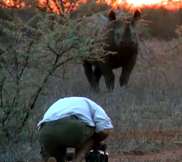 Άνδρας έρχεται αντιμέτωπος με σπάνιο και επιθετικό μαύρο ρινόκερο