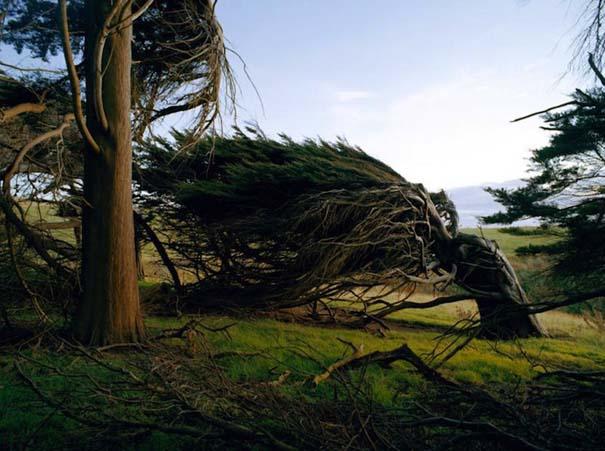 Ανεμοδαρμένα δέντρα του Slope Point (3)