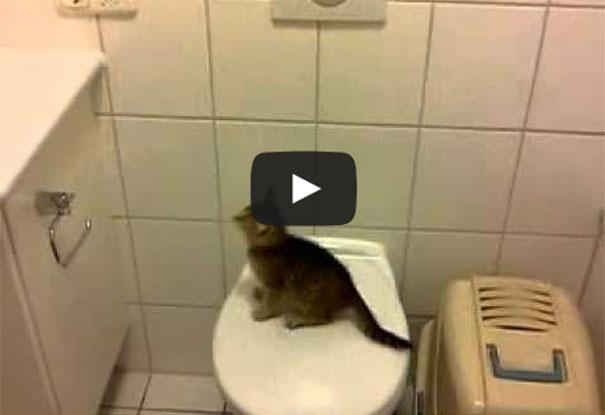 Ατσούμπαλες γάτες