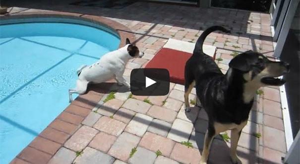 Οι πιο ατσούμπαλοι σκύλοι του κόσμου