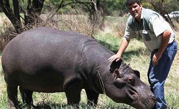 Δεσμοί μεταξύ ανθρώπων και άγριων ζώων (17)