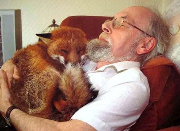 Δεσμοί μεταξύ ανθρώπων και άγριων ζώων (18)