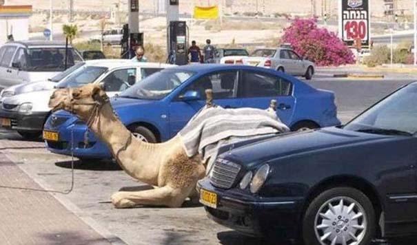 Εν τω μεταξύ, στο Dubai... (3)
