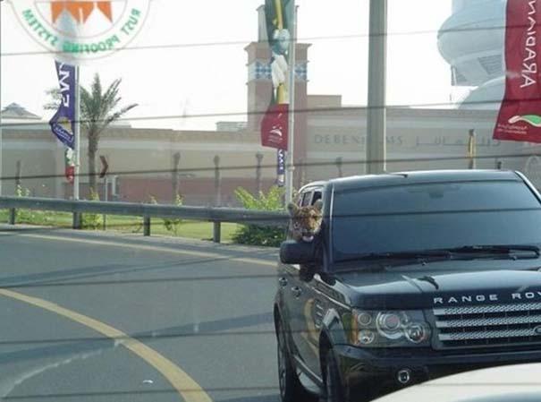 Εν τω μεταξύ, στο Dubai... (5)
