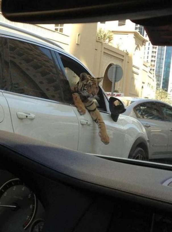 Εν τω μεταξύ, στο Dubai... (6)