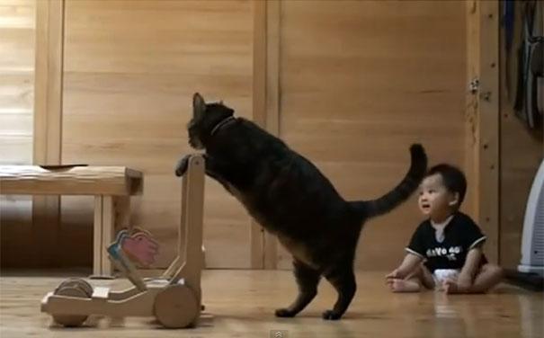 Γάτα μαθαίνει σε μωρό πως να περπατάει