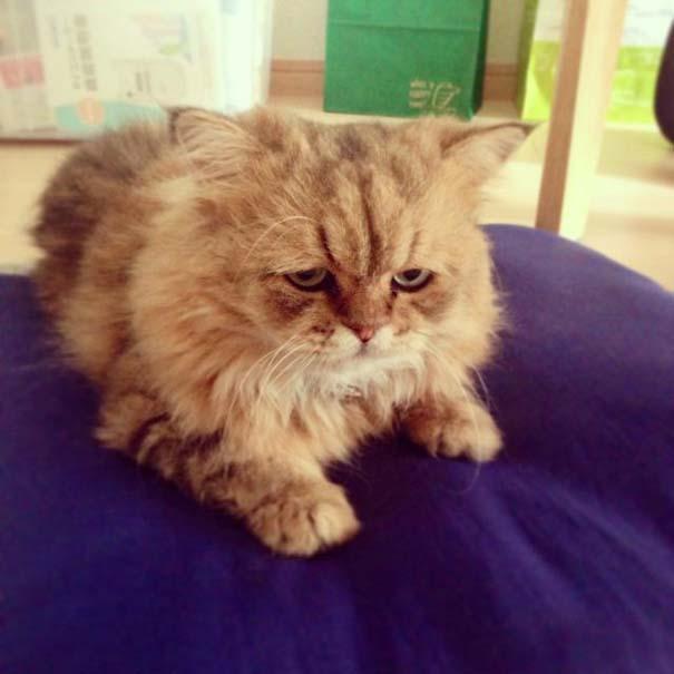 Η γάτα που είναι μονίμως απογοητευμένη (2)