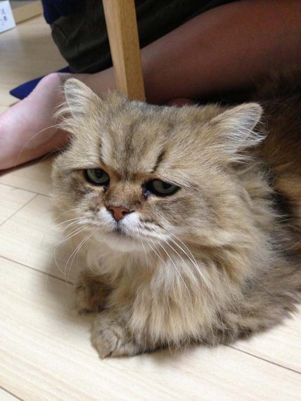Η γάτα που είναι μονίμως απογοητευμένη (3)