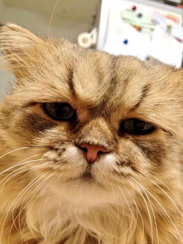 Η γάτα που είναι μονίμως απογοητευμένη (5)