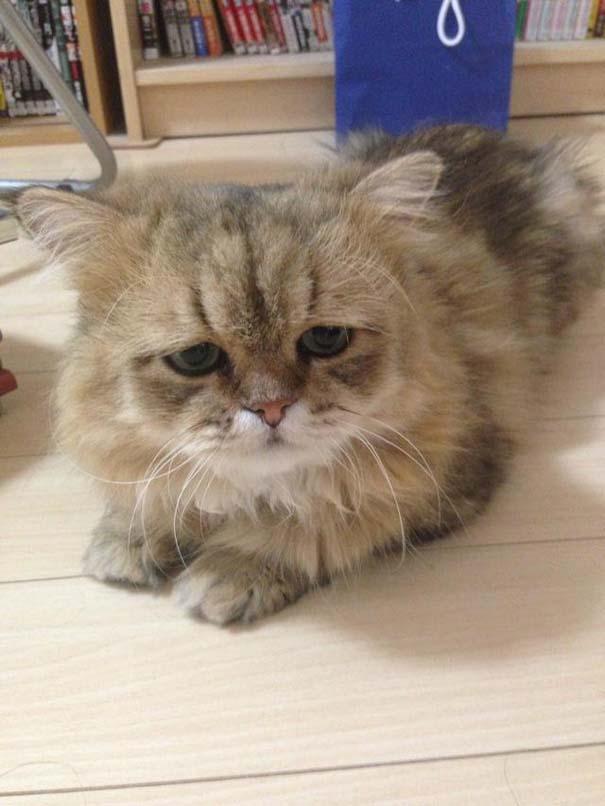 Η γάτα που είναι μονίμως απογοητευμένη (6)