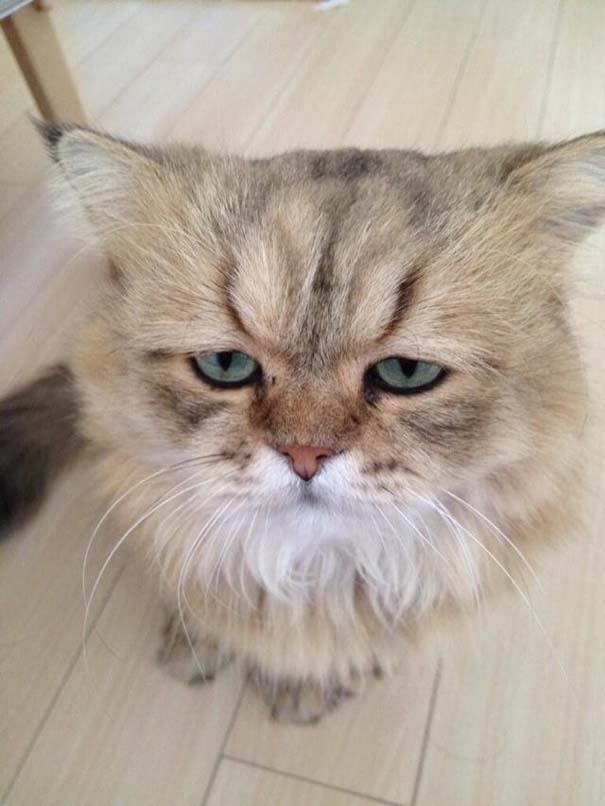 Η γάτα που είναι μονίμως απογοητευμένη (7)