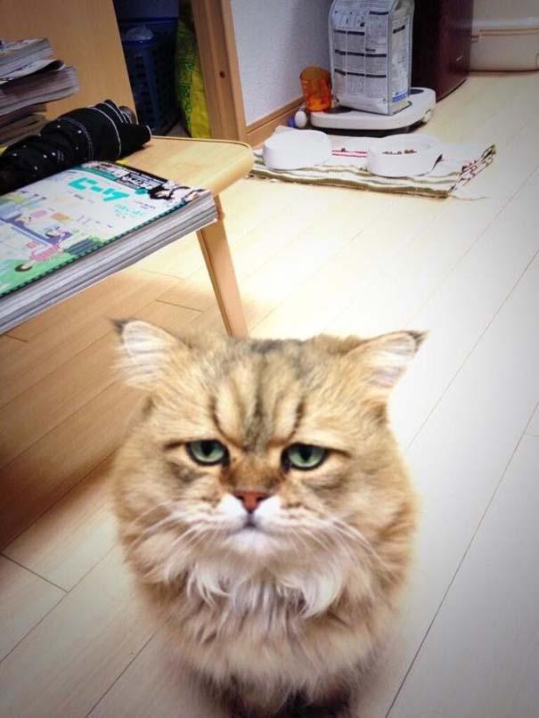 Η γάτα που είναι μονίμως απογοητευμένη (10)