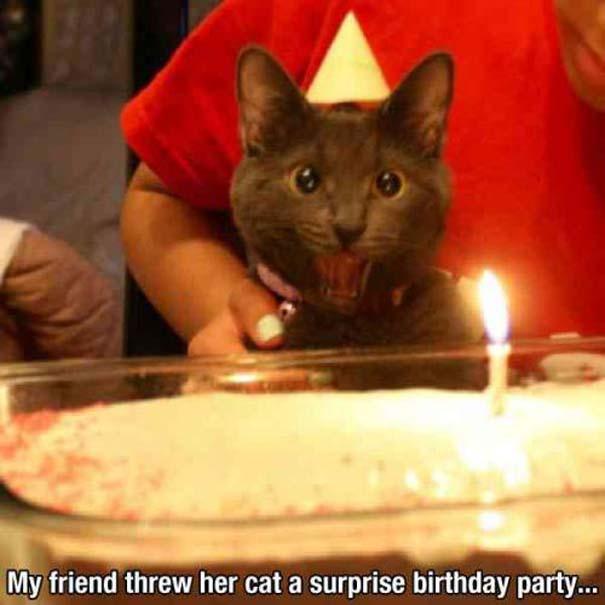 Γάτες που... κάνουν τα δικά τους! (2)