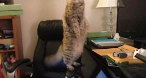 Γάτες που… κάνουν τα δικά τους! #9