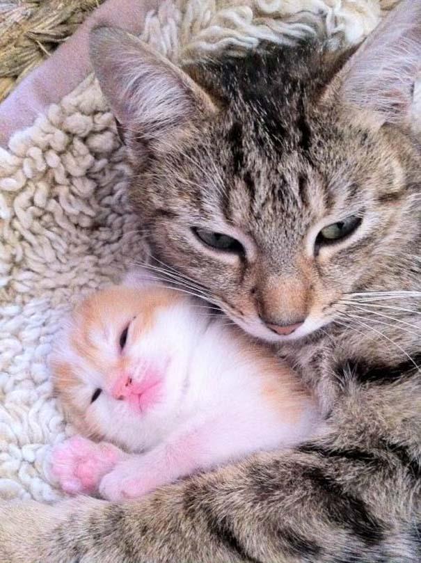 Γάτες που... κάνουν τα δικά τους! (8)