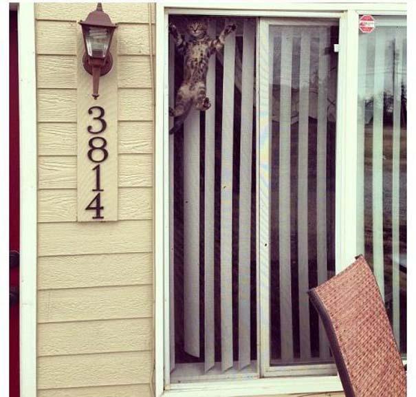 Γάτες που... κάνουν τα δικά τους! (9)