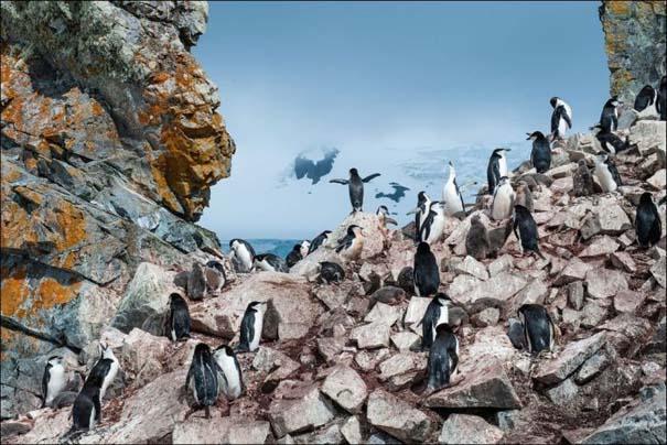 National Geographic 2013: 30+1 εκπληκτικές φωτογραφίες (15)
