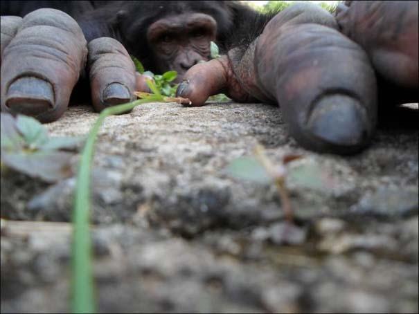 National Geographic 2013: 30+1 εκπληκτικές φωτογραφίες (17)