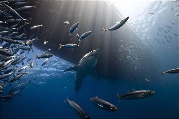 National Geographic 2013: 30+1 εκπληκτικές φωτογραφίες (18)