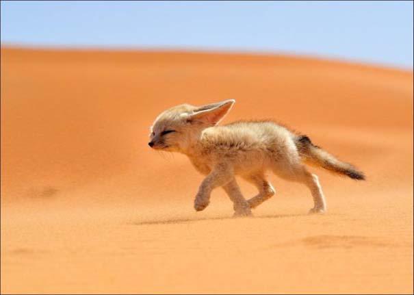 National Geographic 2013: 30+1 εκπληκτικές φωτογραφίες (19)