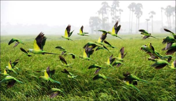 National Geographic 2013: 30+1 εκπληκτικές φωτογραφίες (22)