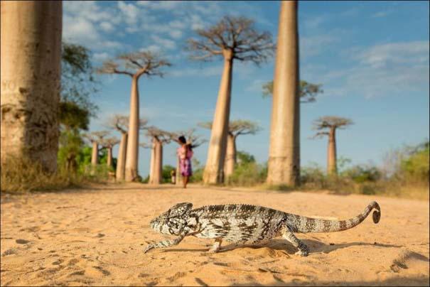 National Geographic 2013: 30+1 εκπληκτικές φωτογραφίες (23)