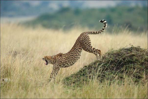 National Geographic 2013: 30+1 εκπληκτικές φωτογραφίες (31)