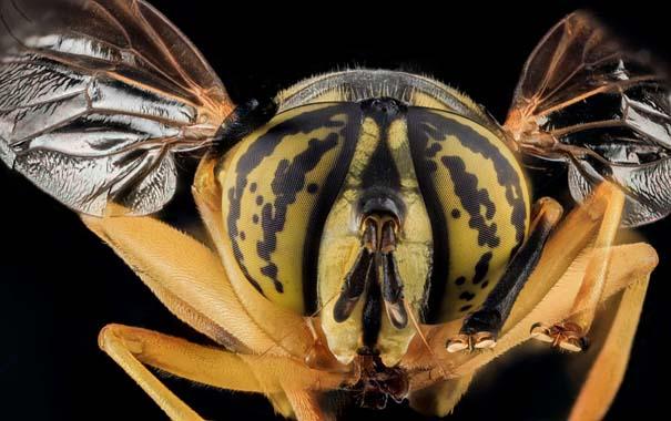 Οι 40 πιο εντυπωσιακές φωτογραφίες εντόμων που έχετε δει (5)