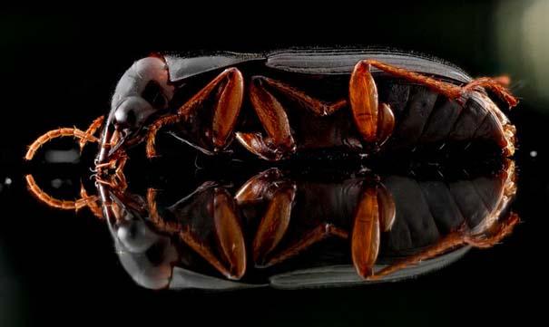 Οι 40 πιο εντυπωσιακές φωτογραφίες εντόμων που έχετε δει (11)