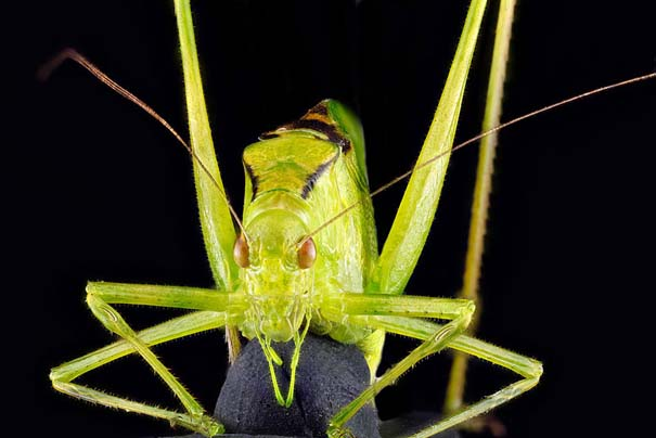 Οι 40 πιο εντυπωσιακές φωτογραφίες εντόμων που έχετε δει (14)