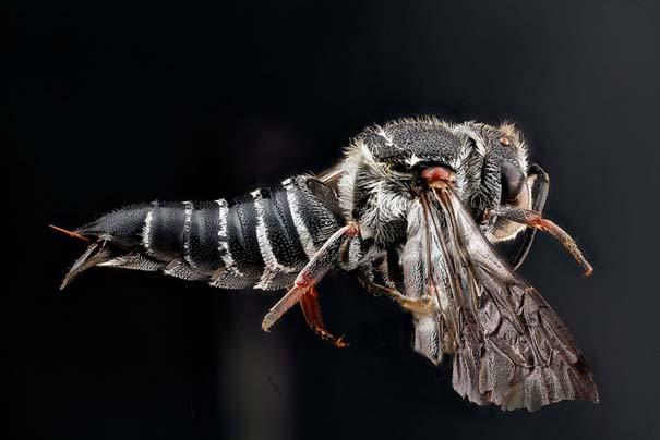 Οι 40 πιο εντυπωσιακές φωτογραφίες εντόμων που έχετε δει (16)
