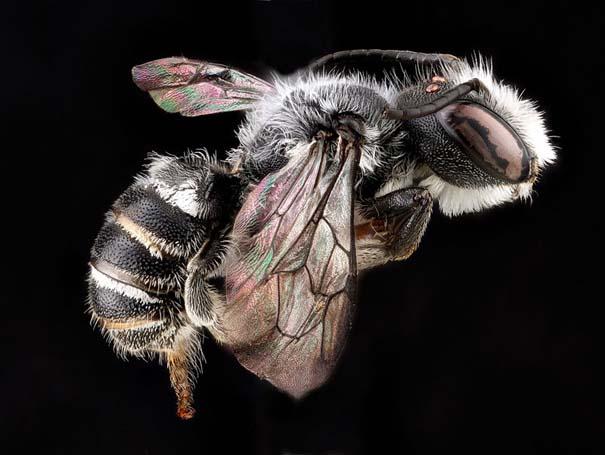 Οι 40 πιο εντυπωσιακές φωτογραφίες εντόμων που έχετε δει (17)