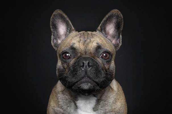Σκύλοι φωτογραφίζονται σαν άνθρωποι (2)