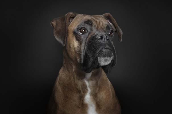 Σκύλοι φωτογραφίζονται σαν άνθρωποι (3)