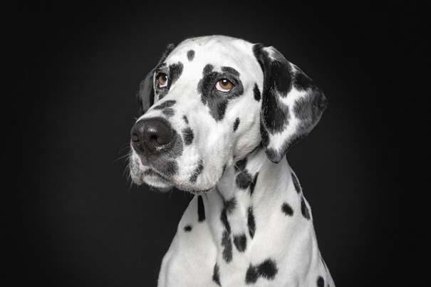 Σκύλοι φωτογραφίζονται σαν άνθρωποι (4)