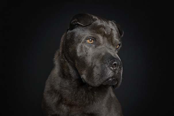 Σκύλοι φωτογραφίζονται σαν άνθρωποι (5)