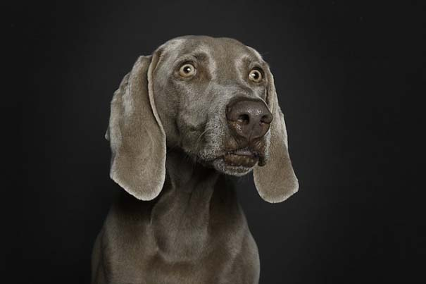Σκύλοι φωτογραφίζονται σαν άνθρωποι (6)