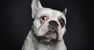 Σκύλοι φωτογραφίζονται σαν άνθρωποι