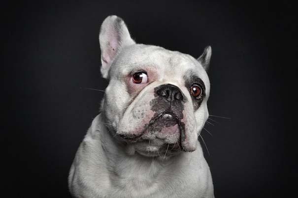 Σκύλοι φωτογραφίζονται σαν άνθρωποι (7)