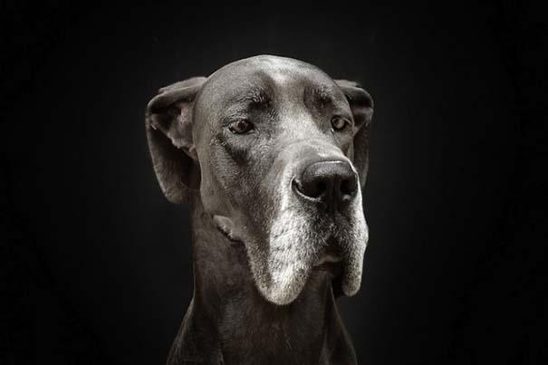 Σκύλοι φωτογραφίζονται σαν άνθρωποι (9)