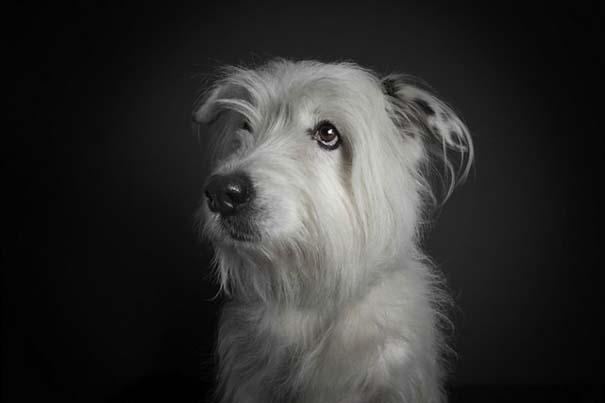 Σκύλοι φωτογραφίζονται σαν άνθρωποι (8)