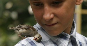 Η ιδιαίτερη φιλία ενός αγοριού με ένα σπουργίτι