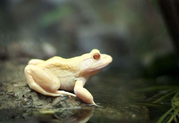 Ζώα Αλμπίνο (19)