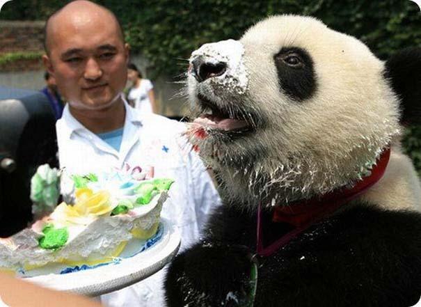 Ζώα που γιορτάζουν τα γενέθλια τους (1)