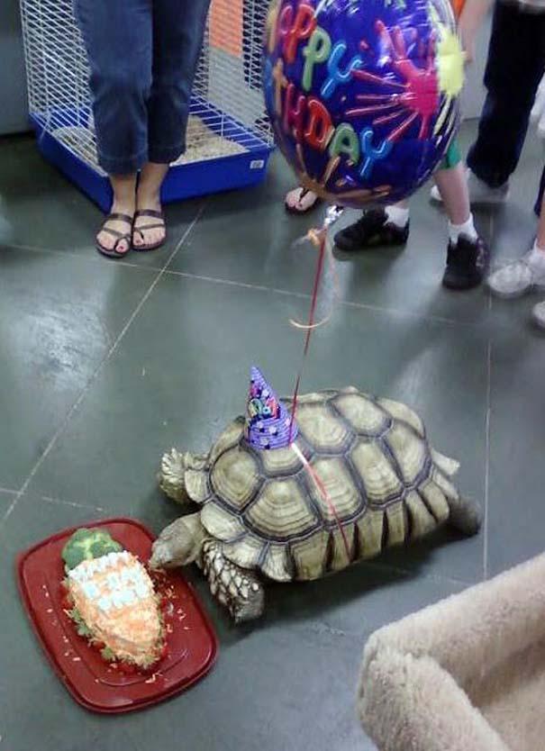 Ζώα που γιορτάζουν τα γενέθλια τους (3)