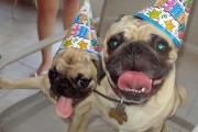 Ζώα που γιορτάζουν τα γενέθλια τους (4)