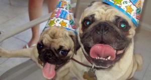 19 ζώα που γιορτάζουν τα γενέθλια τους