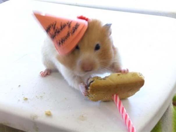 Ζώα που γιορτάζουν τα γενέθλια τους (5)