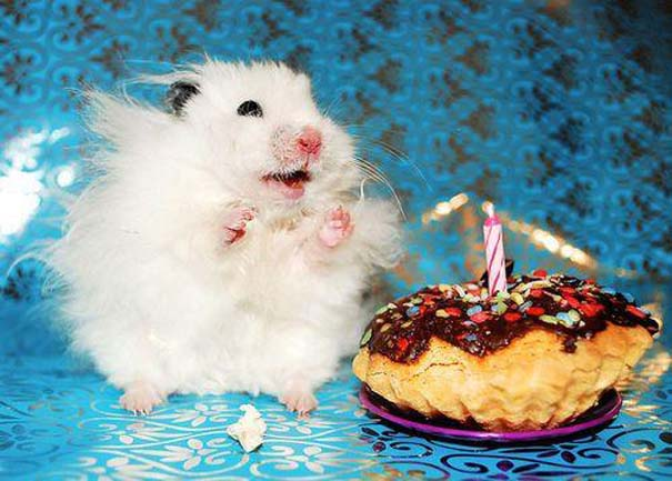 Ζώα που γιορτάζουν τα γενέθλια τους (6)